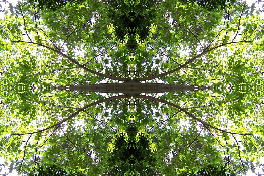 Botanic Kaleidoscope #4 by Craig Watson