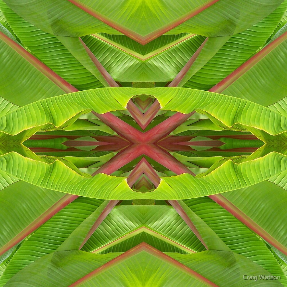 Botanic Kaleidoscope #12 by Craig Watson