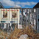 I like the Iberian Lynx by Janet Leadbeater