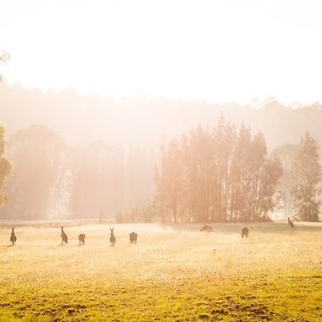 Kangaroos at sunrise by halans