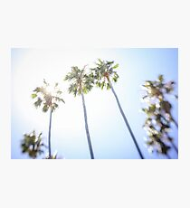 Palmtrees against the sun Photographic Print