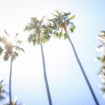 Palmtrees against the sun by halans