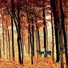 Fall Forest by Leann Moses Rardin