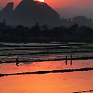 Sunset over rice field by Stephen Colquitt