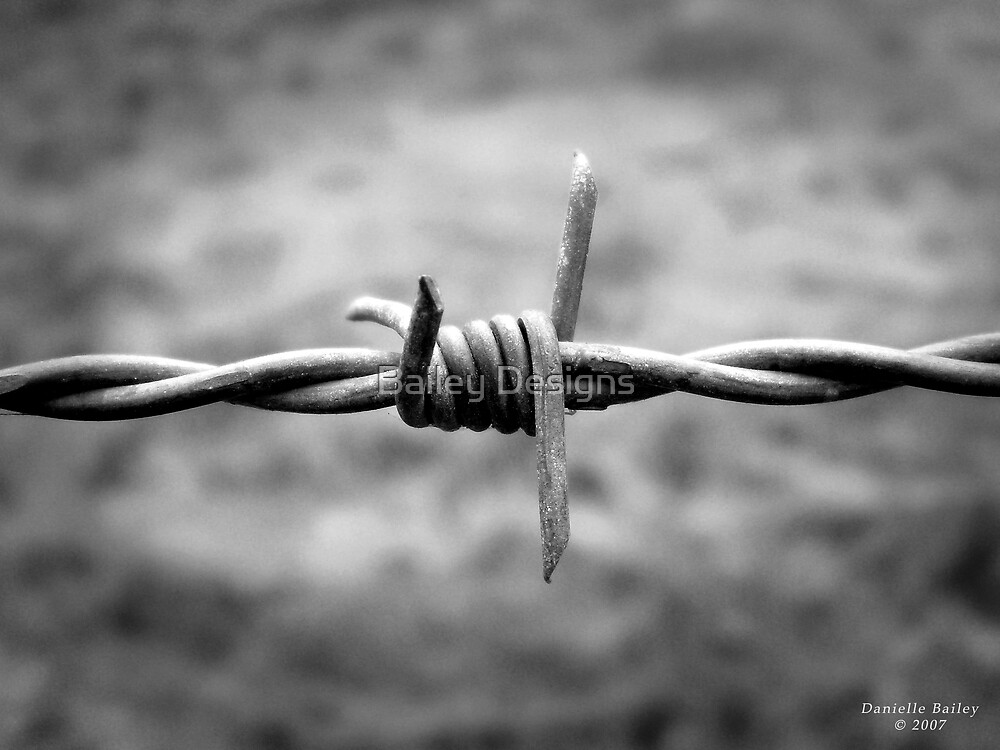 Barbed Wire by Bailey Designs