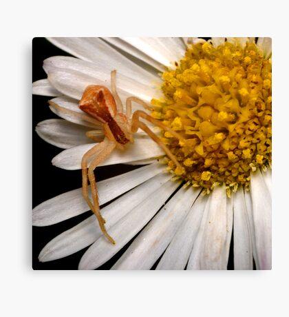 Crab Spider Canvas Print