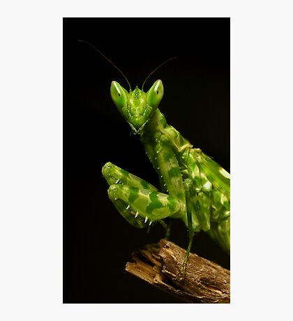 Flower Mantis Beauty Shot Photographic Print