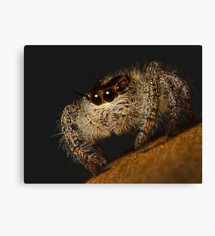 Woolly Predator Canvas Print