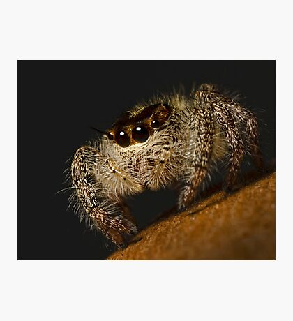 Woolly Predator Photographic Print