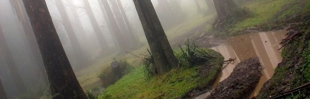 Toolangi Mist by Thomas Kress