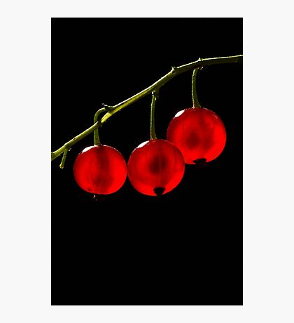 Red Currant Berries Photographic Print