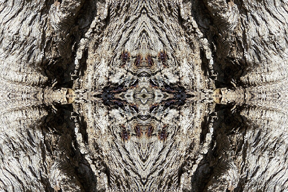 Gnarled Tree Trunk -  Kaleidoscope #1 by Craig Watson