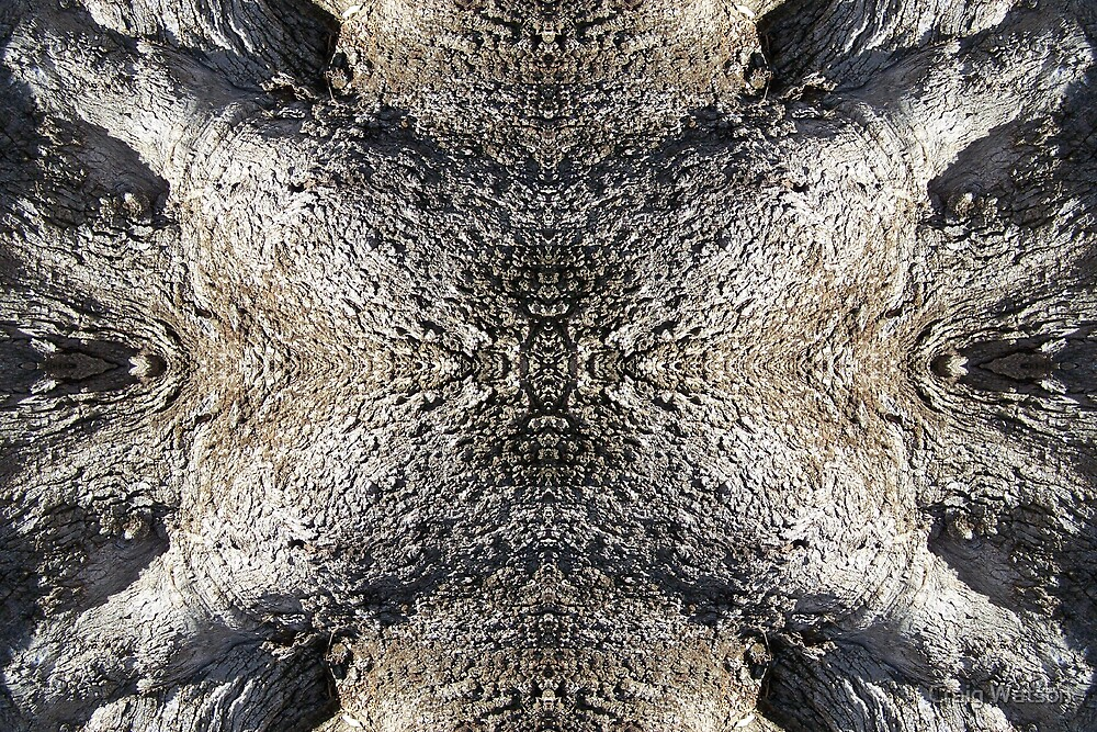 Gnarled Tree Trunk -  Kaleidoscope #4 by Craig Watson