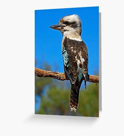 Laughing Kookaburra Greeting Card