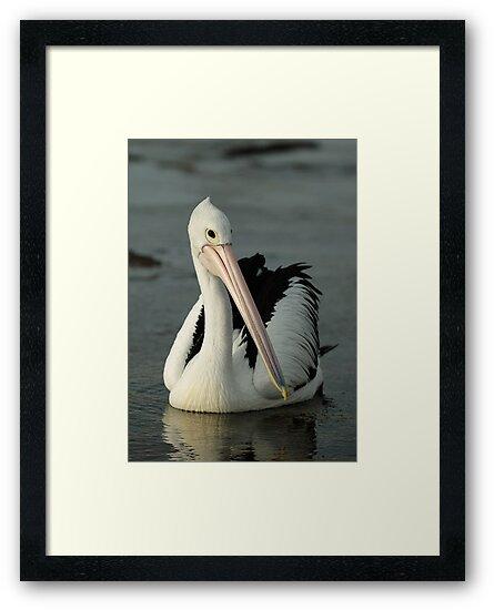 Pelican by Geoffrey Chang