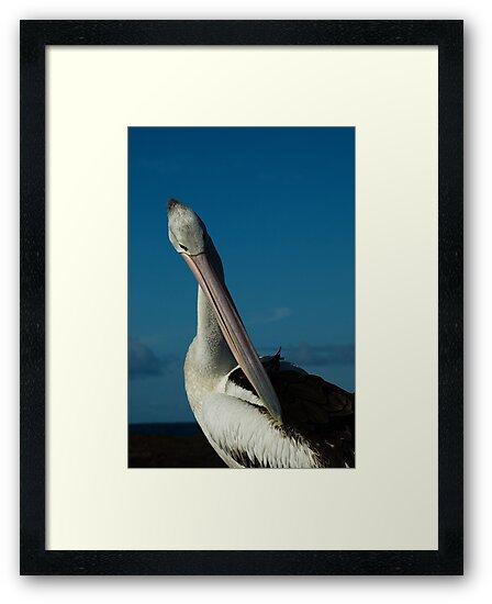 Pelican preening by Geoffrey Chang