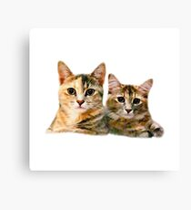 Kitten Canoodle Canvas Print
