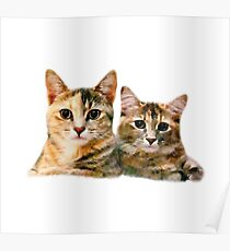 Kitten Canoodle Poster