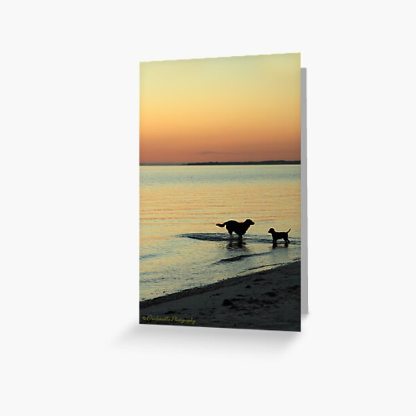 Friends at Sunset Greeting Card