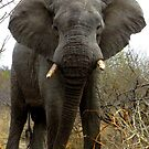 Big Beautiful Boy - kindly donated by Evan Matthews - Volunteer by pennies4eles