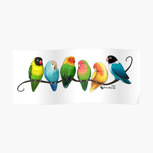Colorful Lovebirds Poster