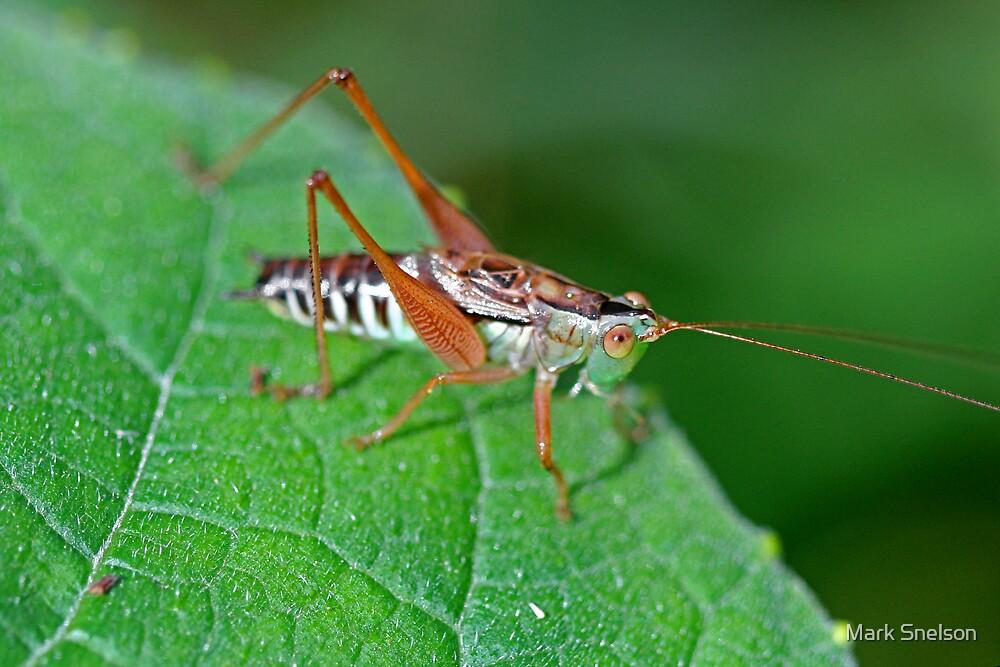 Grasshopper 17 by Mark Snelson