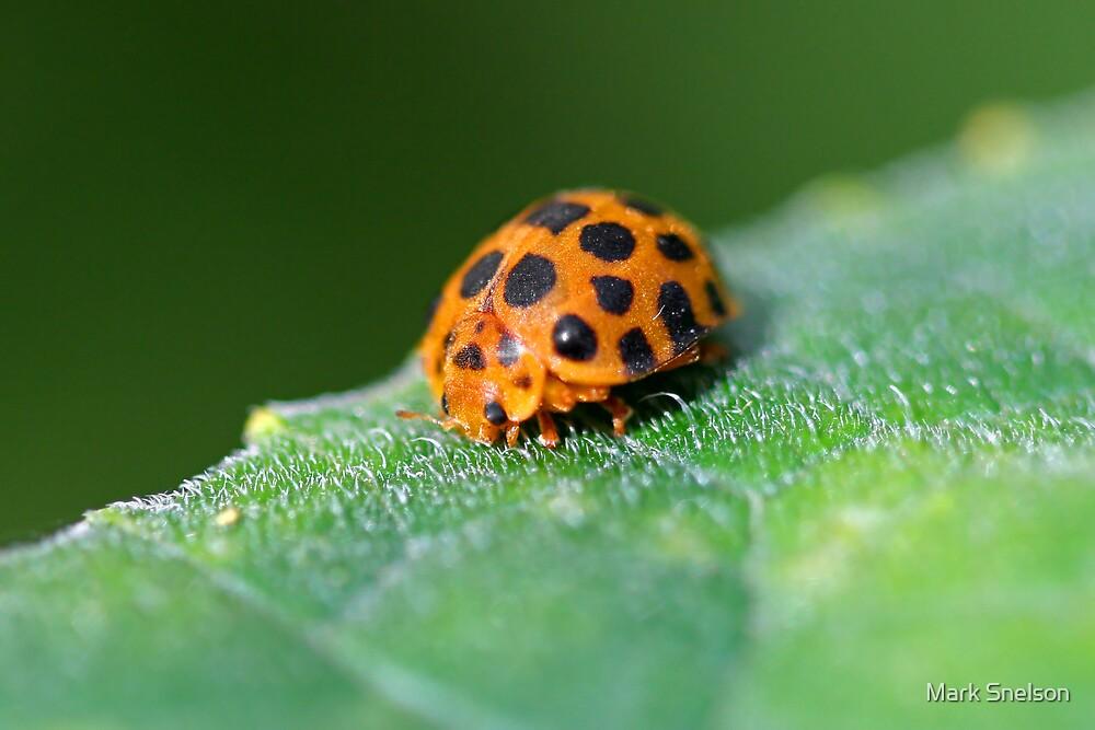 Ladybug 6 by Mark Snelson
