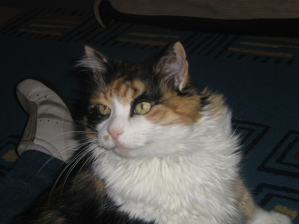 The Fashionable Cat by steveoderocker