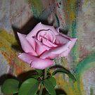 rose by buddy