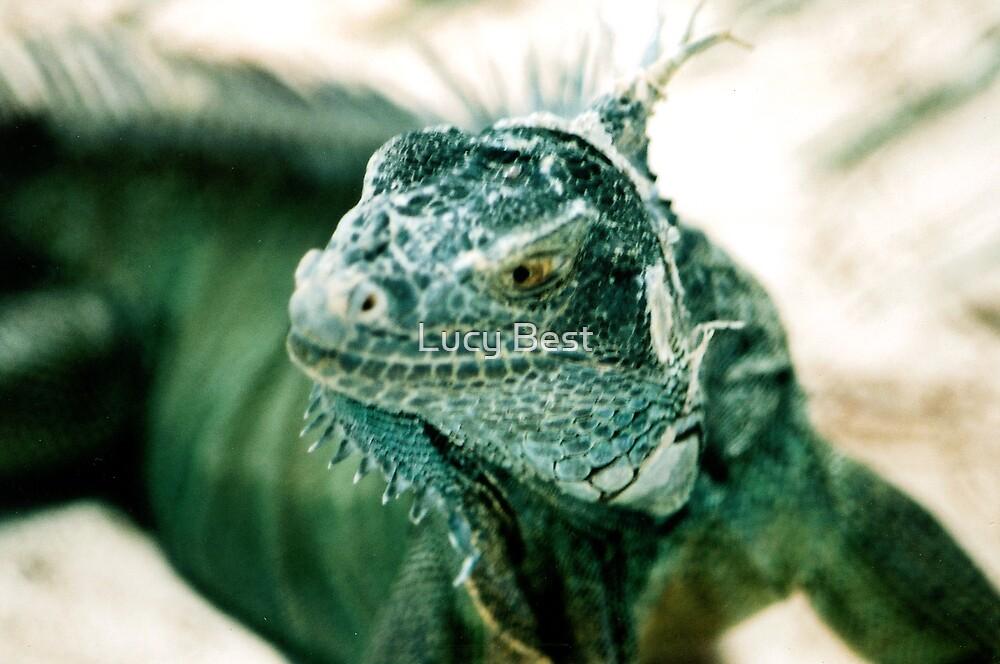 Iguana by Lucy Best