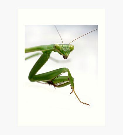 False Garden Mantis 2 Art Print