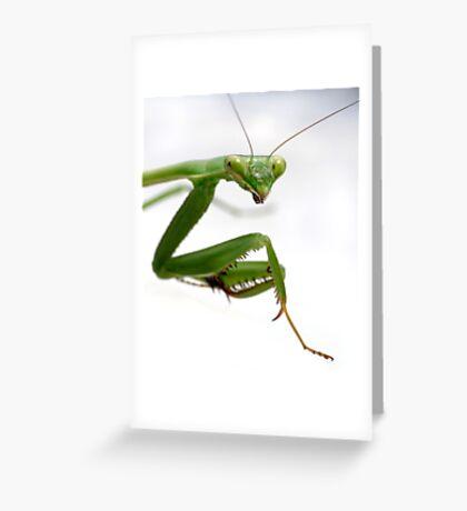 False Garden Mantis 2 Greeting Card