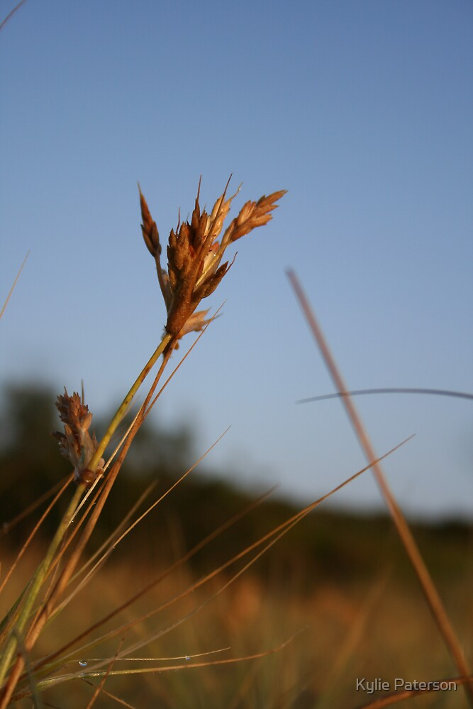 Grass at Kingscliff NSW by Kylie Paterson