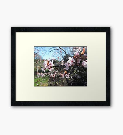 Every Heart Has A Story To Tell (Blossom) Framed Print