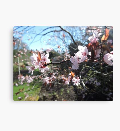 Every Heart Has A Story To Tell (Blossom) Canvas Print