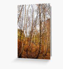 Saxon Birches Greeting Card