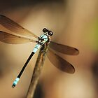 Dragonfly by AnnaKT