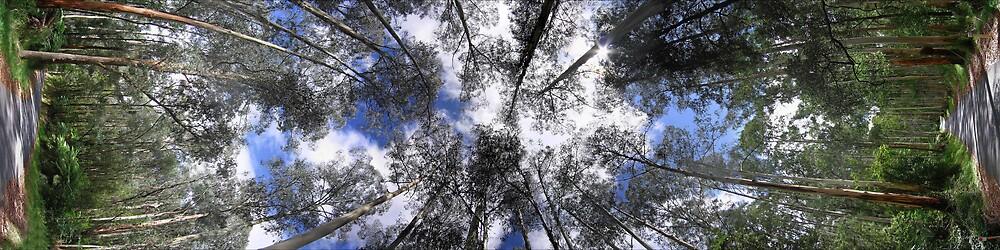 Tree Top Turn by Devan Foster
