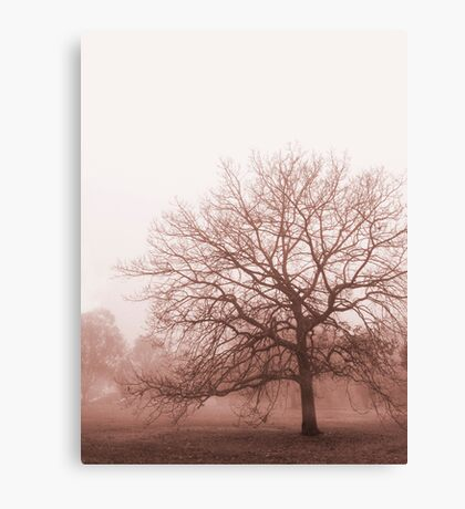 Hazy Morning Canvas Print