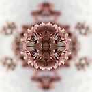 Blossom Burst #5 by John Hill-Daniel