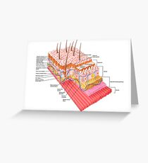 Anatomy of the human skin. Greeting Card