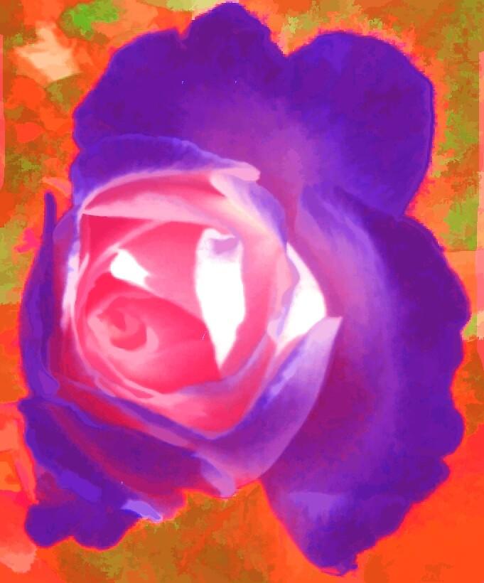 My purple rose by Lynn