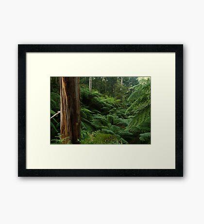 Ferns, Otway Ranges Framed Print