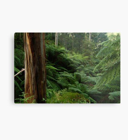 Ferns, Otway Ranges Metal Print