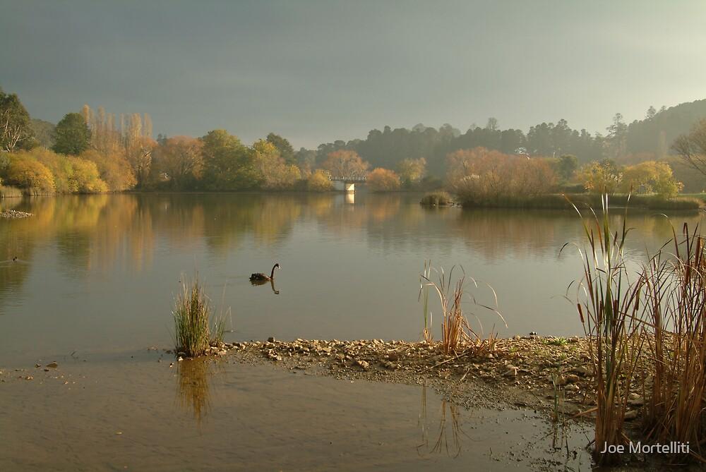 Autumn Fog, Lake Daylesford by Joe Mortelliti
