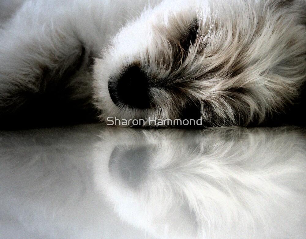 Milo by Sharon Hammond