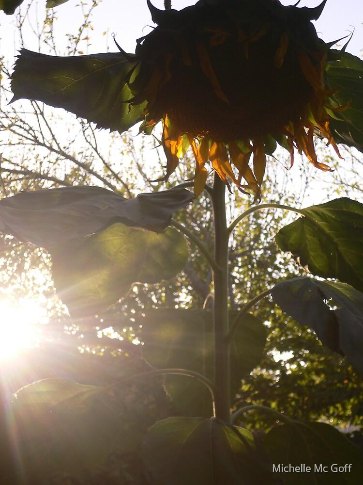 sunflower glare by Michelle Mc Goff