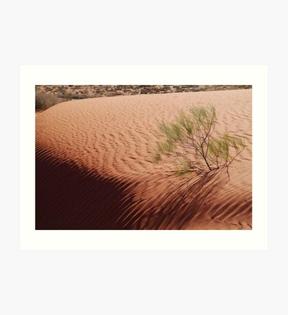 Perched,Simpson Desert,N.T. Art Print