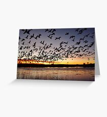 First Flight at Bosque del Apache Greeting Card