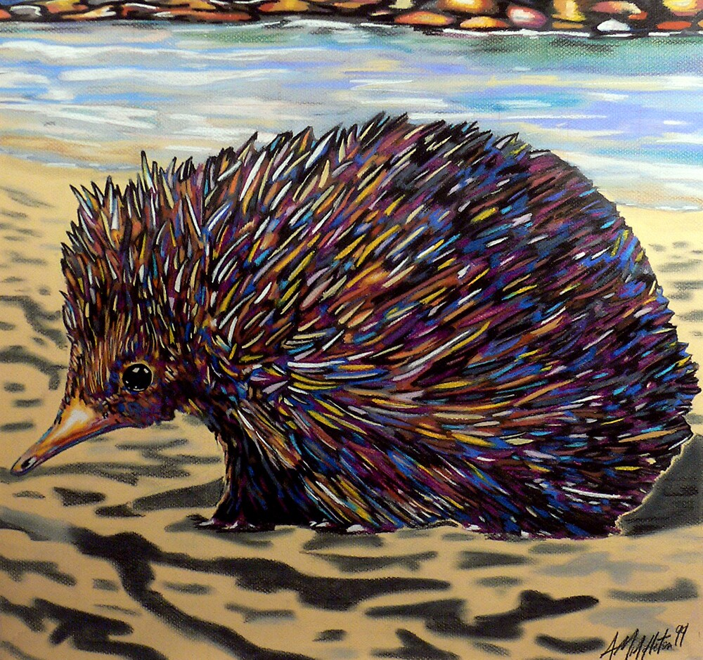 Echidna by Anthony Middleton